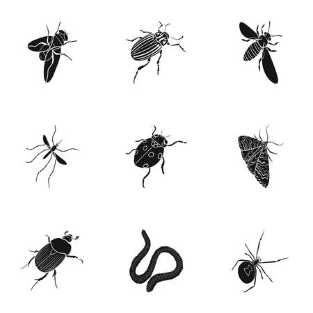 ladybug: wasp, bee, ant, fly, spider, mosquito and other insect species. Various insects set collection icons in black style vector symbol stock isometric illustration .