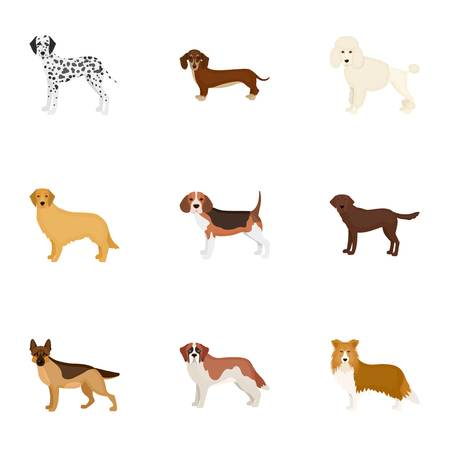 Dalmatian, dachshund, poodle, and other  icon in cartoon style.Bernard, laika, shepherd icons in set collection