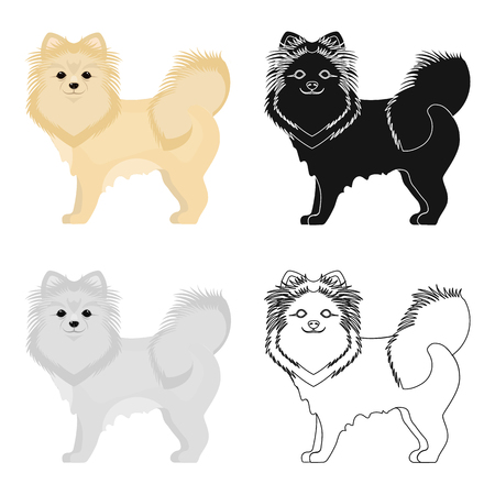 hounds: Spitz single icon in cartoon style.Spitz vector symbol stock illustration web.