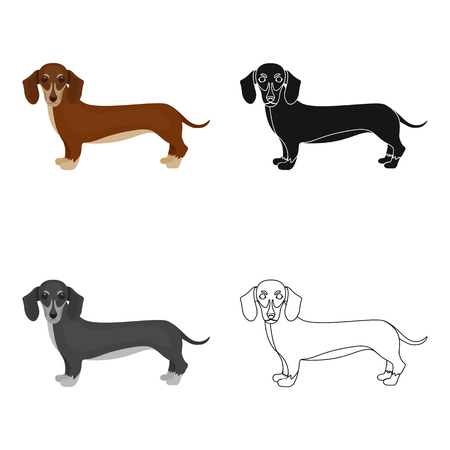 hounds: Dachshund, single icon in cartoon style.Dachshund, vector symbol stock illustration web.