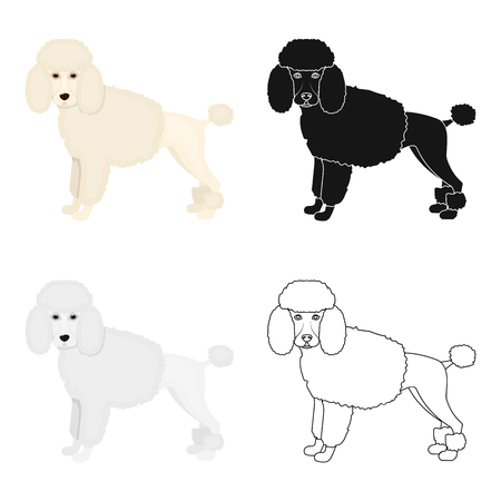 hounds: Poodle, single icon in cartoon style.Poodle, vector symbol stock illustration web.
