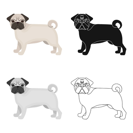 hounds: Pug single icon in cartoon style.Pug, vector symbol stock illustration web.