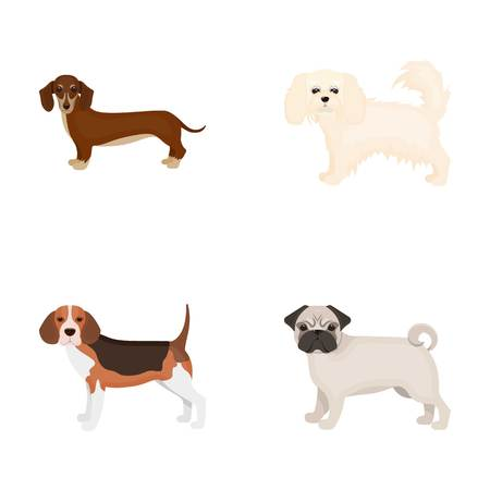 Dog, animal, domestic, and other web icon in cartoon style.Dachshund, maltese, bulldog icons in set collection.