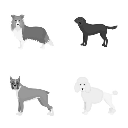Dog, laika, beagle and other web icon in monochrome style.Poodle, animal, ears icons in set collection.