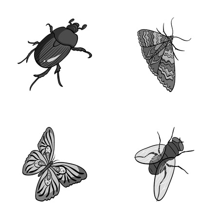 Arthropods insect, moth, butterfly, fly. Insects set collection icons in monochrome style vector symbol stock isometric illustration web.