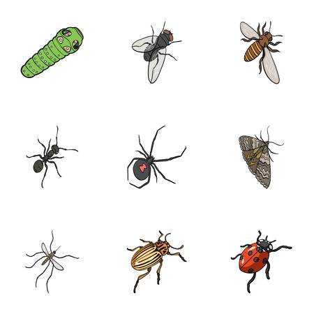 wasp, bee, ant, fly, spider, mosquito and other insect species. Various insects set collection icons in cartoon style vector symbol stock isometric illustration web. Illustration