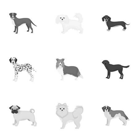 Sheepdog, dachshund, bernard, and other web icon in monochrome style.Spitz, boxer, beagle, icons in set collection.
