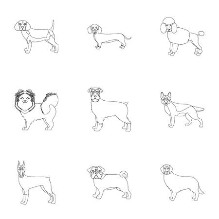 Sheepdog, dachshund, bernard, and other web icon in outline style.Spitz, boxer, beagle, icons in set collection. Illustration