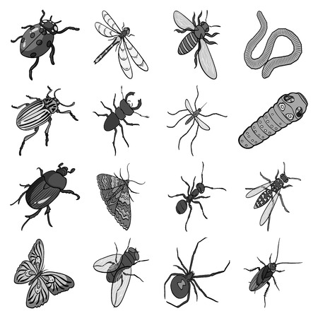 wasp, bee, ant, fly, spider, mosquito and other insect species. Various insects set collection icons in monochrome style vector symbol stock isometric illustration web. Illustration
