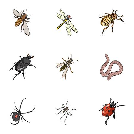 coleoptera: Beetle, wasp, bee, ant, fly, spider, mosquito and other insect species. Various insects set collection icons in cartoon style vector symbol stock isometric illustration web.