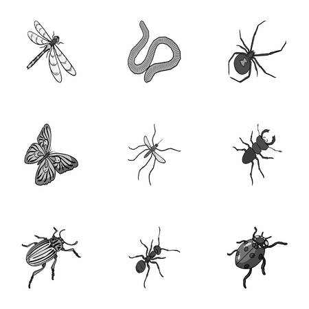 Beetle, wasp, bee, ant, fly, spider, mosquito and other insect species. Various insects set collection icons in monochrome style vector symbol stock isometric illustration web.