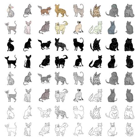 Katzenrassen setzen Ikonen im Karikaturstil. Große Sammlung von Katze Rassen Vektor-Symbol stock Illustration Standard-Bild - 88530522