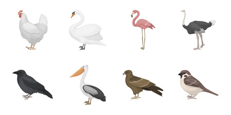 Types of birds icons in set collection for design. Home and wild bird vector symbol stock web illustration.