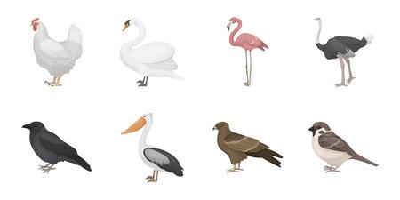 Arten von Vogelikonen in der Satzsammlung für Design. Haupt und wilde Vogelvektorsymbolvorrat-Netzillustration. Standard-Bild - 88760239