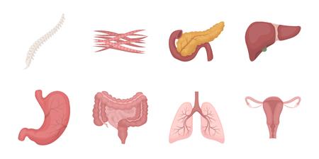 Interne Organe von menschlichen Ikonen in der Satzsammlung für Design. Anatomie und Medizinvektorsymbol-Vorratillustration.