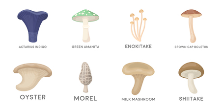 Poisonous and edible mushroom icons in set collection for design. Different types of mushrooms vector symbol stock  illustration. Illustration