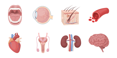 Internal organs of a human icons in set collection for design. Anatomy and medicine vector symbol stock  illustration.