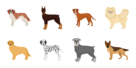 Dog breeds icons in set collection for design.Dog pet vector symbol stock web illustration.