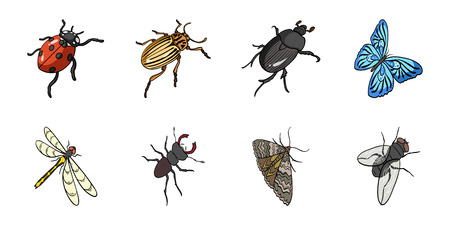 Different kinds of insects icons in set collection for design. Insect arthropod isometric vector symbol stock web illustration.