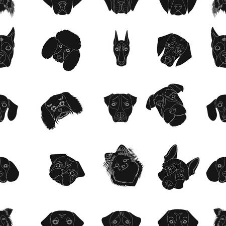Doberman, Dalmatian, Dachshund, Spitz, Stafford and other breeds of dogs.Muzzle of the breed of dogs set collection icons in black style vector symbol stock illustration web. Vettoriali