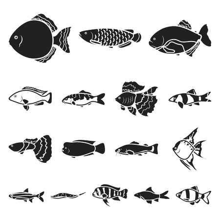 Different types of fish black icons. Illustration