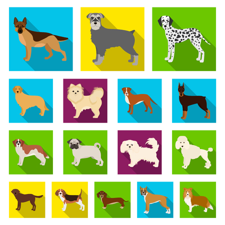 Dog breeds flat icons in set collection for design.Dog pet vector symbol stock  illustration.