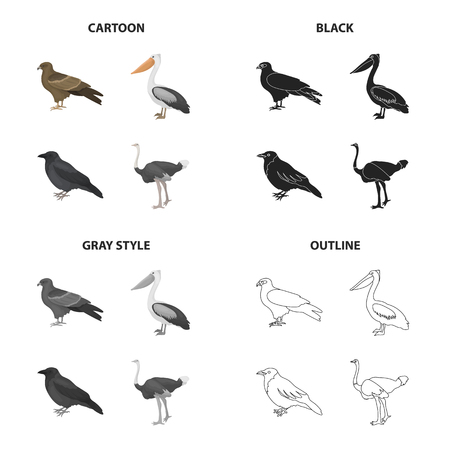 A hawk, a bird of prey, a pelican, a gray crow, an emu ostrich. Bird set collection icons in cartoon black monochrome outline style vector symbol stock illustration . Illustration