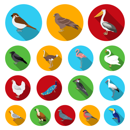 Types of birds icon. Illustration