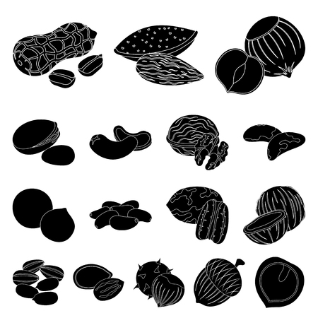 Different kinds of nuts black icons in set collection for design.Nut Food vector symbol stock  illustration. Vettoriali