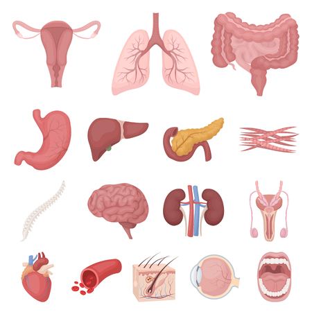 Internal organs of a human cartoon icons in set collection for design. Anatomy and medicine vector symbol stock web illustration.