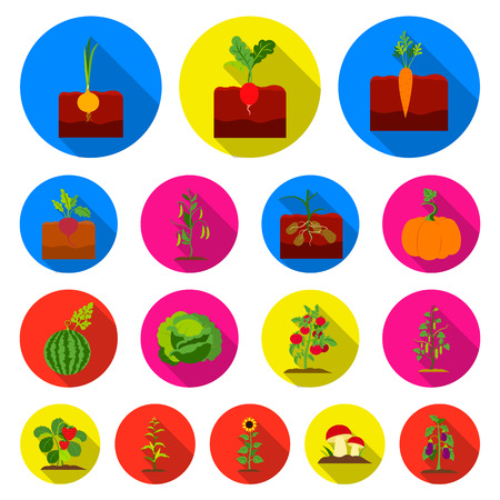 Plant, vegetable flat icons in set collection for design.