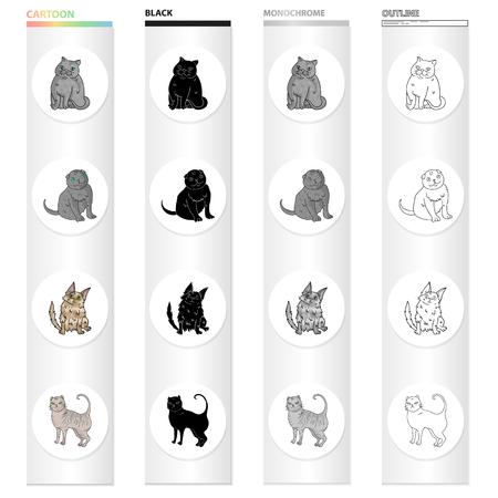 Kattenras Exotische korthaar, Schotse vouw, Turkse Angora, Brits. Verschillende rassen van cat set verzameling iconen in cartoon zwart zwart-wit overzicht stijl vector symbool stock illustratie web.