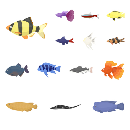Different types of fish cartoon icons in set collection for design. Marine and aquarium fish vector symbol stock illustration. Illustration