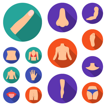 Part of the body, limb flat icons in set collection for design. Human anatomy vector symbol stock web illustration.