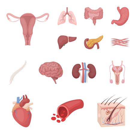 Rganos internos de una caricatura humana iconos en conjunto colección para diseño. Anatomía y medicina vector símbolo stock web ilustración. Foto de archivo - 94218366