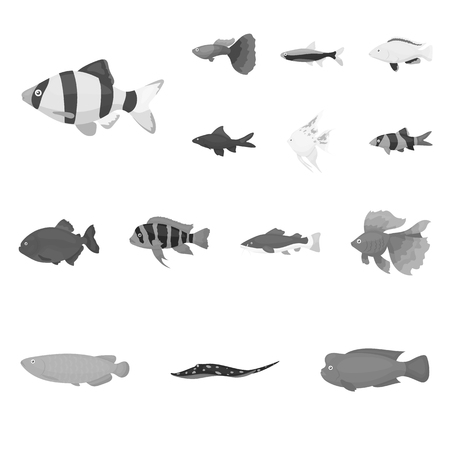 different types of aquarium and marine fish guppies gold a