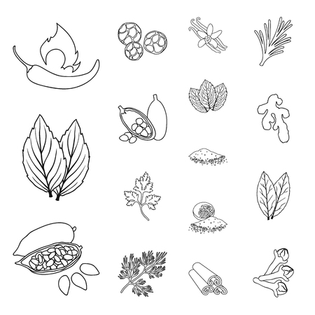Herb and spices outline icons in set collection for design.Different kinds of seasonings vector symbol stock  illustration. Illustration