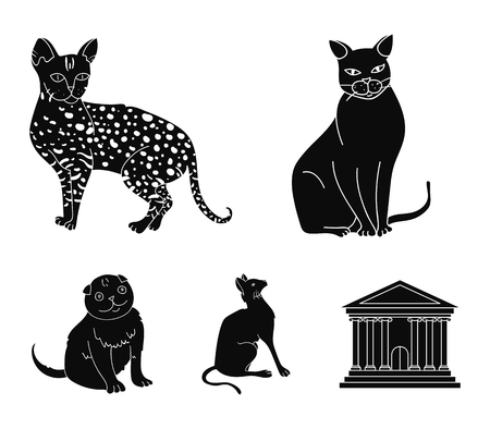 Siamese and other species. Cat breeds set collection icons in black style vector symbol stock illustration web.