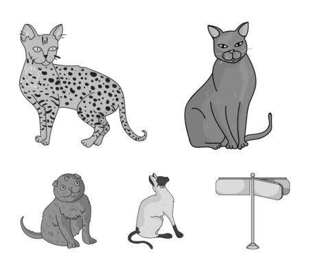 Siamese and other species. Cat breeds set collection icons in monochrome style vector symbol stock illustration web.