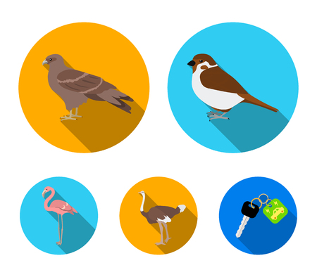 Sparrow and other species. Birds set collection icons in flat style vector symbol stock illustration . Illustration