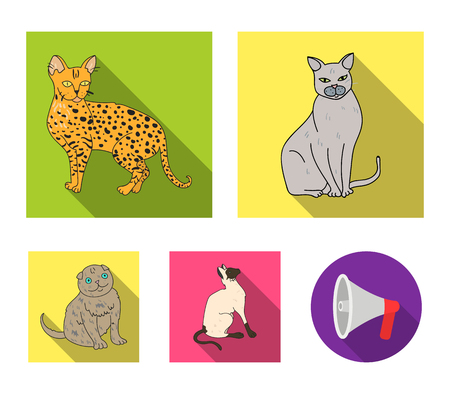 Siamese and other species. Cat breeds set collection icons in flat style vector symbol stock illustration web.