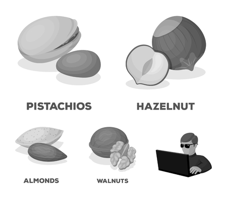 Hazelnut, pistachios, walnut, almonds. Different kinds of nuts set collection icons in monochrome style vector symbol stock illustration. Illustration