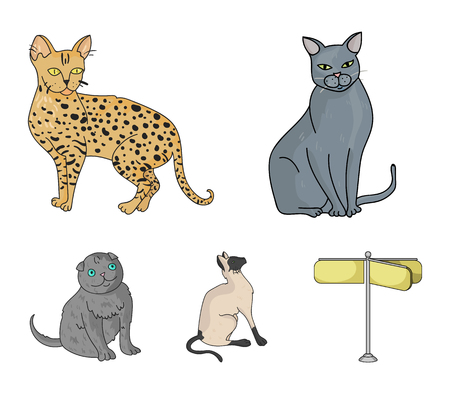 Siamese and other species. Cat breeds set collection icons in cartoon style vector symbol stock illustration .