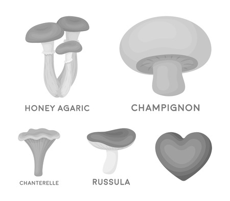 Champignon, honey, agarics, russula, chanterelle. set collection icons in monochrome style vector symbol stock illustration . Иллюстрация