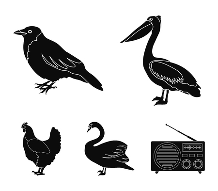 Pelican, crow and other species. Birds set collection icons in black style vector symbol stock illustration .