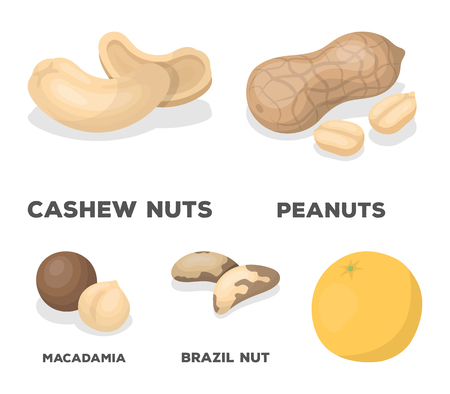 Peanuts, cashews, brazil nuts, macadamia.Different kinds of nuts set collection icons in cartoon style vector symbol stock illustration .