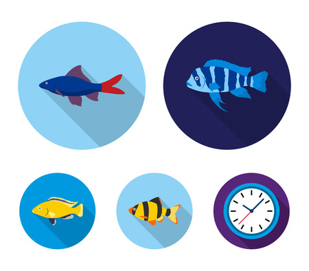 Botia, clown, piranha, cichlid, hummingbird, guppy,Fish set collection icons in flat style vector symbol stock illustration web.