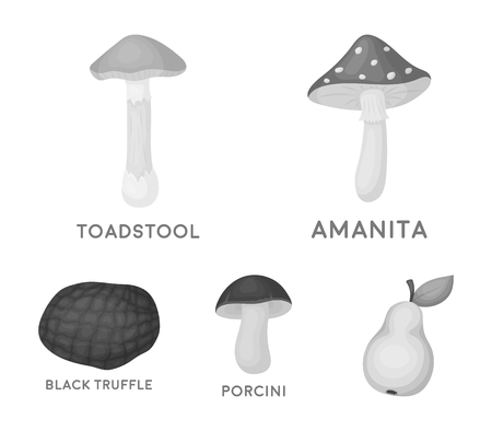 Amanita, porcini, black truffle,toadstool. set collection icons in monochrome style vector symbol stock illustration web.