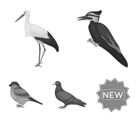 Woodpecker, stork and others. Birds set collection icons in monochrome style vector symbol stock illustration web.