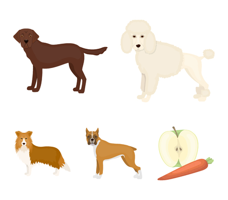 Dog breeds facing front set collection icons in colored illustration